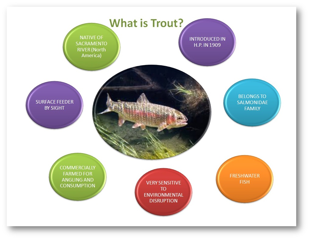 what is trout (JPG, 131 KB)